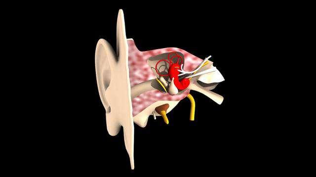 Cover: Querschnitt durch das Ohr