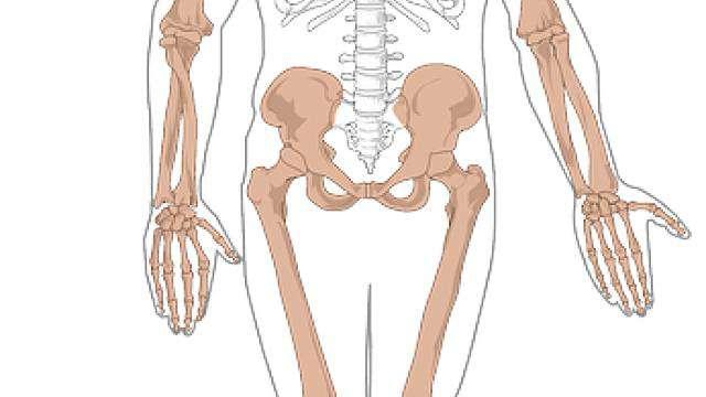 Cover: Menschliches Skelett